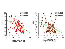 2型糖尿病患者における血中DHEAと動脈硬化の関連性